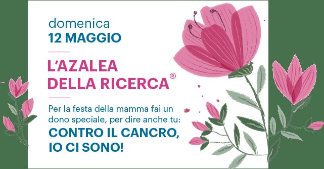 Azalea Della Ricerca 2019